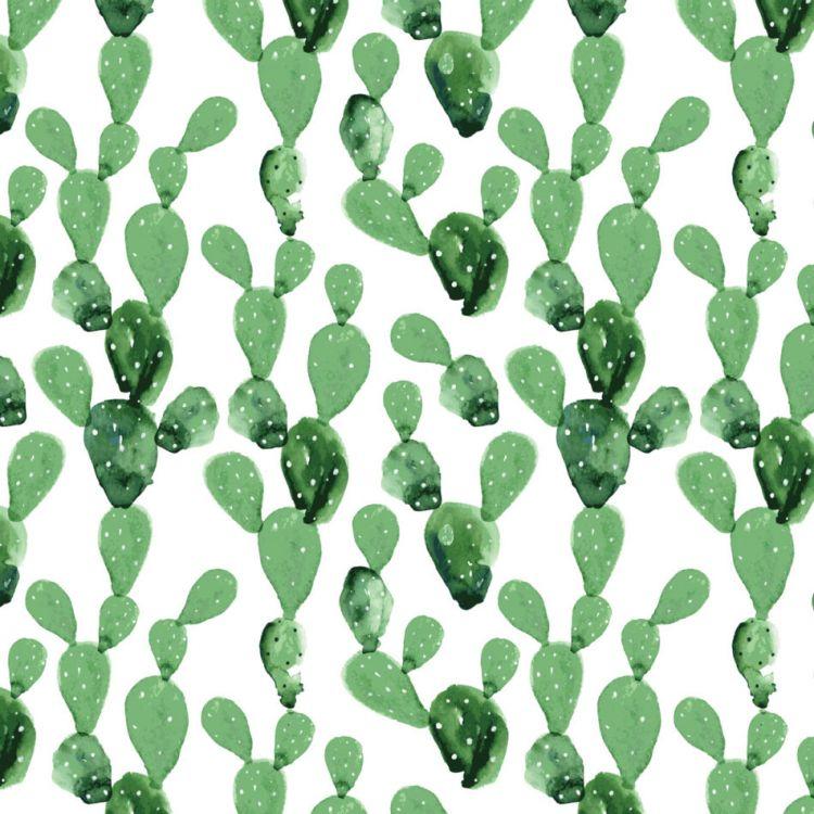 Dekornik - Tapeta Kaktusy