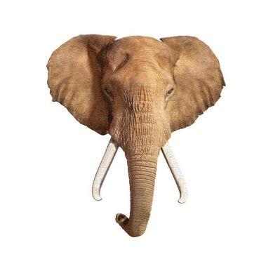 Madd Capp - Puzzle I am Elephant 700 elem. 10+