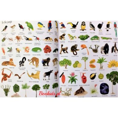 Wydawnictwo Usborne Publishing - 1000 things in nature