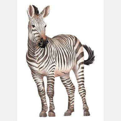 Pastelowelove - Plakat Zebra 20x30 cm