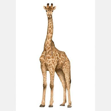 Pastelowelove - Plakat Żyrafa 20x30 cm