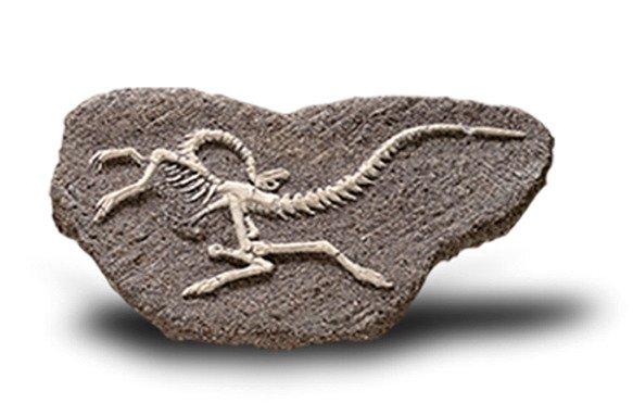Bones&More - Duży Szkielet Dinozaura Wykopalisko na Kamieniu