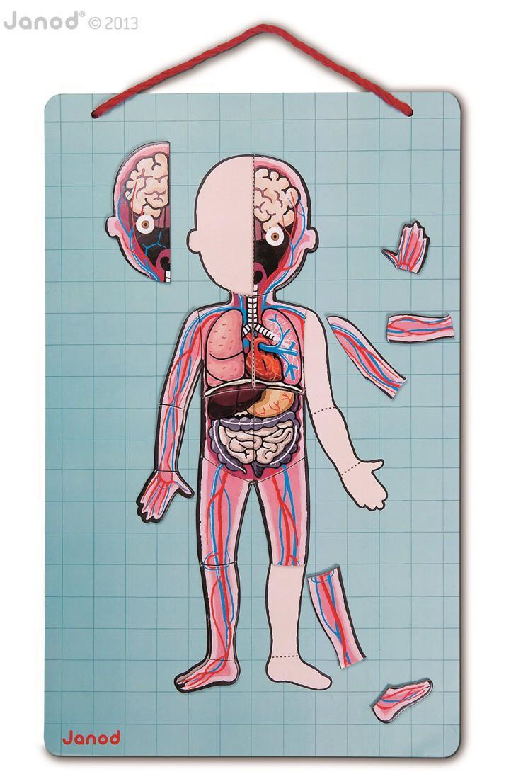 Janod - Układanka Magnetyczna Ciało Człowieka